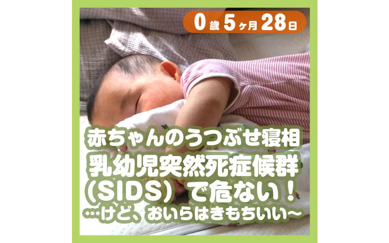 0-05-28_赤ちゃんのうつぶせ寝相、乳幼児突然死症候群(SIDS)で危ない!……けど、おいらは、きもちいい〜_800