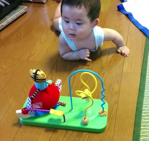 赤ちゃん,8ヶ月,ずり這い,しまじろう,おもちゃ