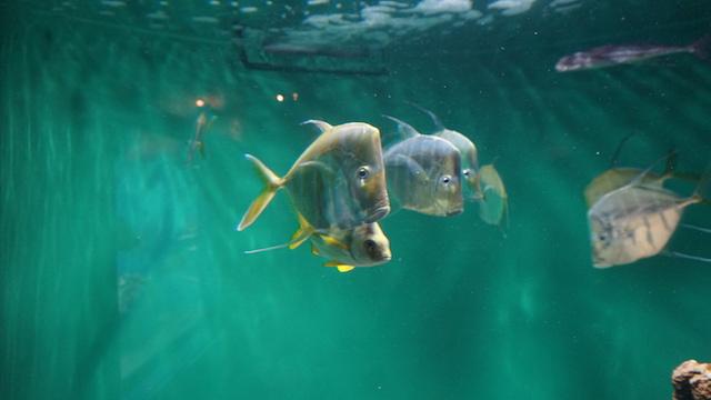葛西臨海水族館2