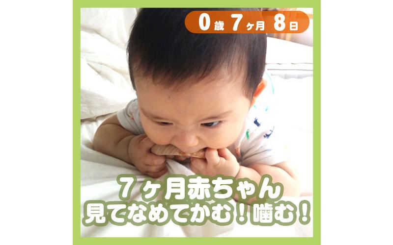 0-07-08_7ヶ月赤ちゃん、見てなめてかむ!噛む!_800